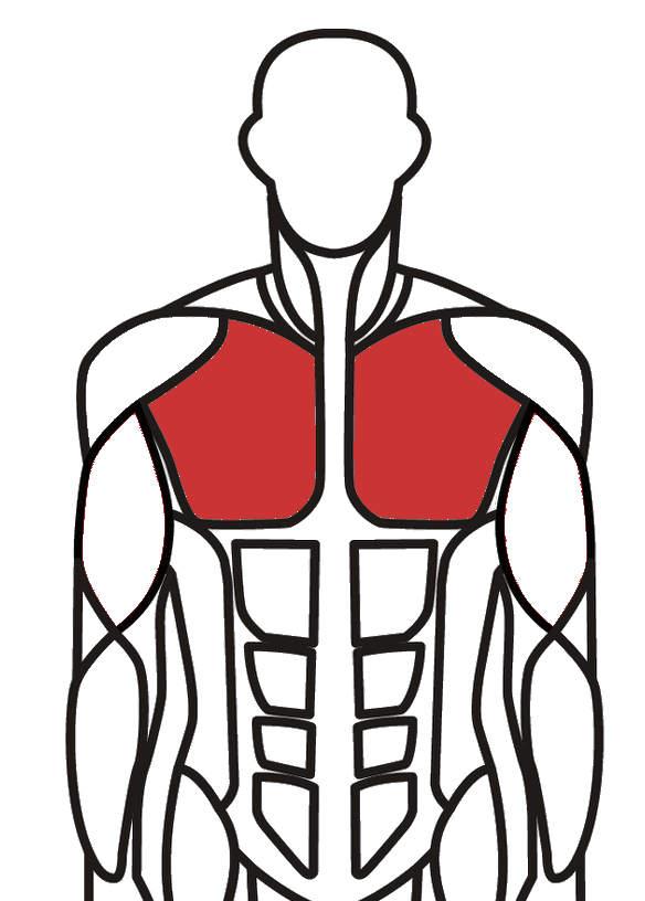 Øvre og nedre bryst træning